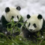The Panda Fallout – Has Google Missed The Mark?